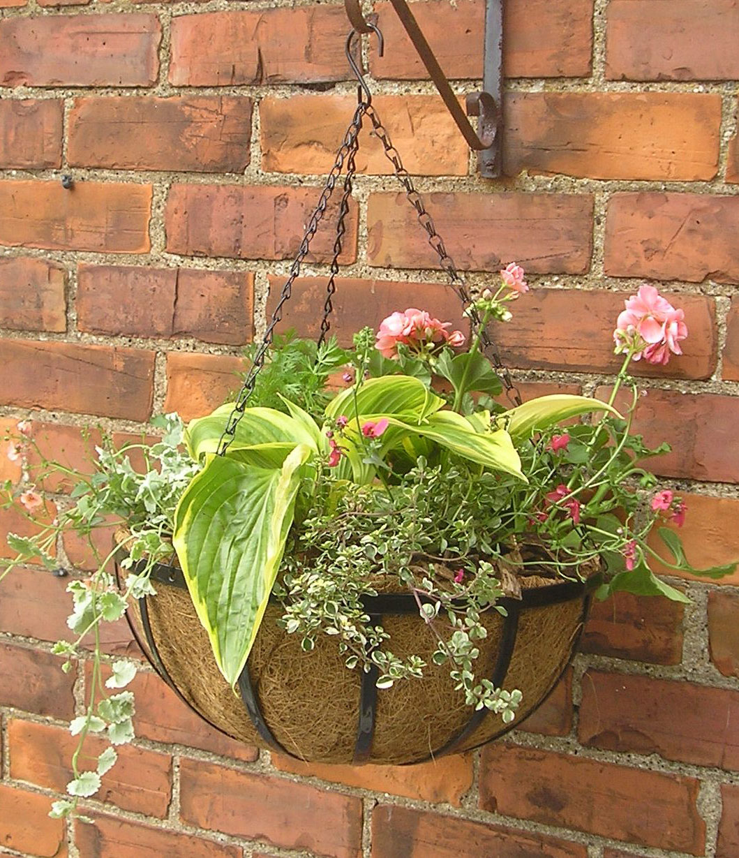 Range Flower Baskets : Uk farm supplies quot hanging plant basket esk range